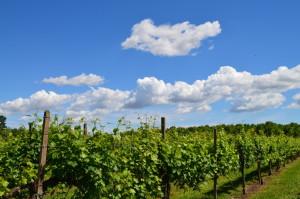 Sorseggi di Vino 2015 - Casa Angelo - 000